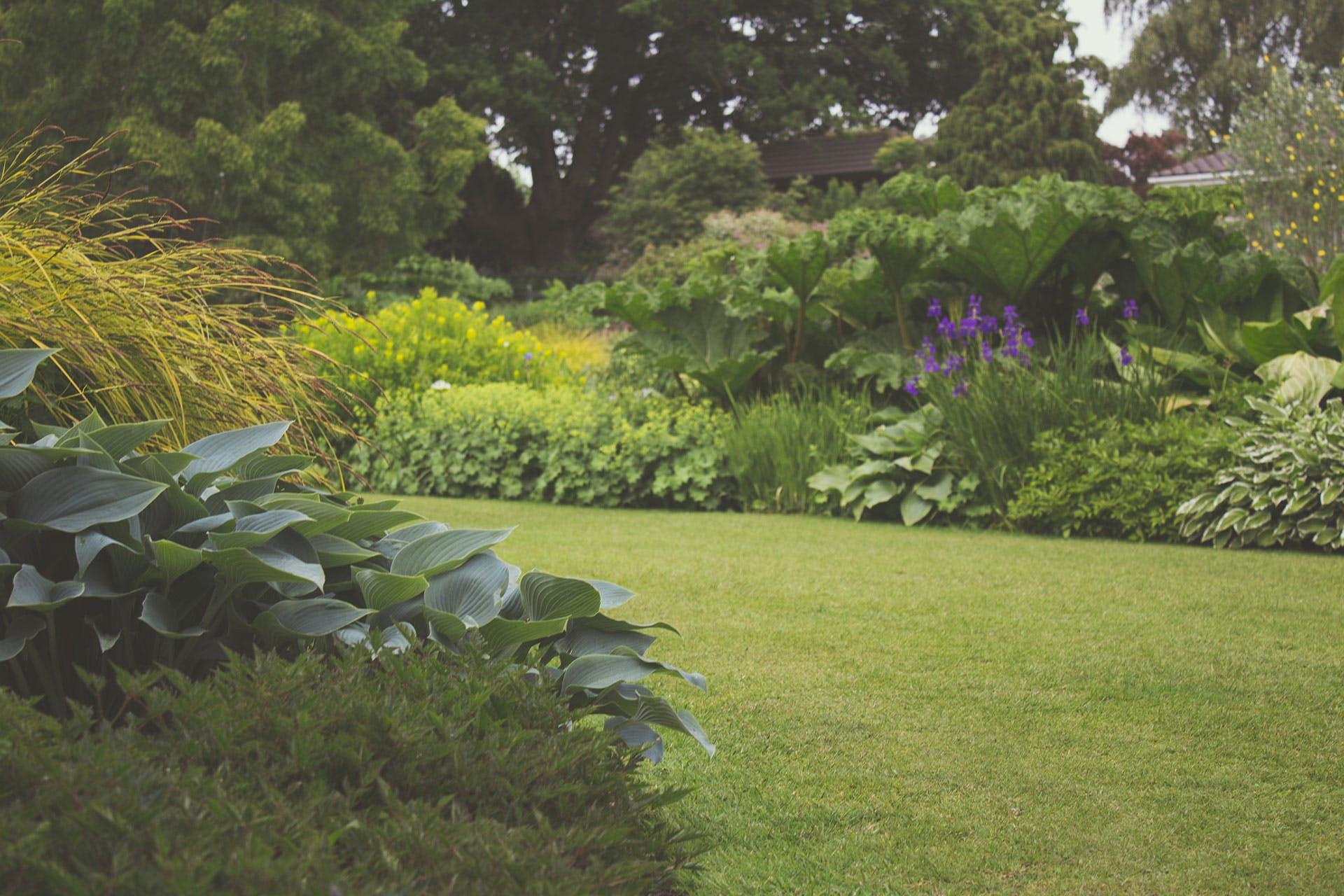 Bahçe, bitkiler, çim