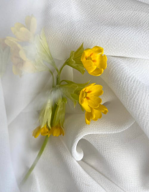 Top view of delicate yellow flowers with long green stem placed on white creased fabric in light room at home