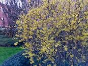 nature, flower, bloom