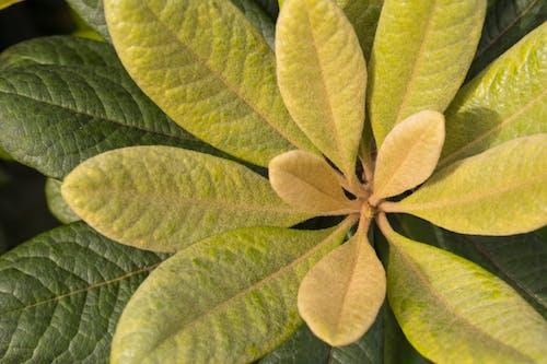 Ảnh lưu trữ miễn phí về akreker, cận cảnh, Hawaii, hệ thực vật