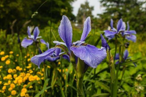 Бесплатное стоковое фото с сад, цветы