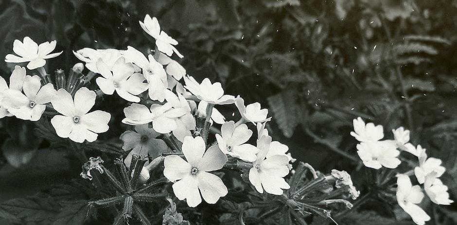 beautiful flowers, blur, india