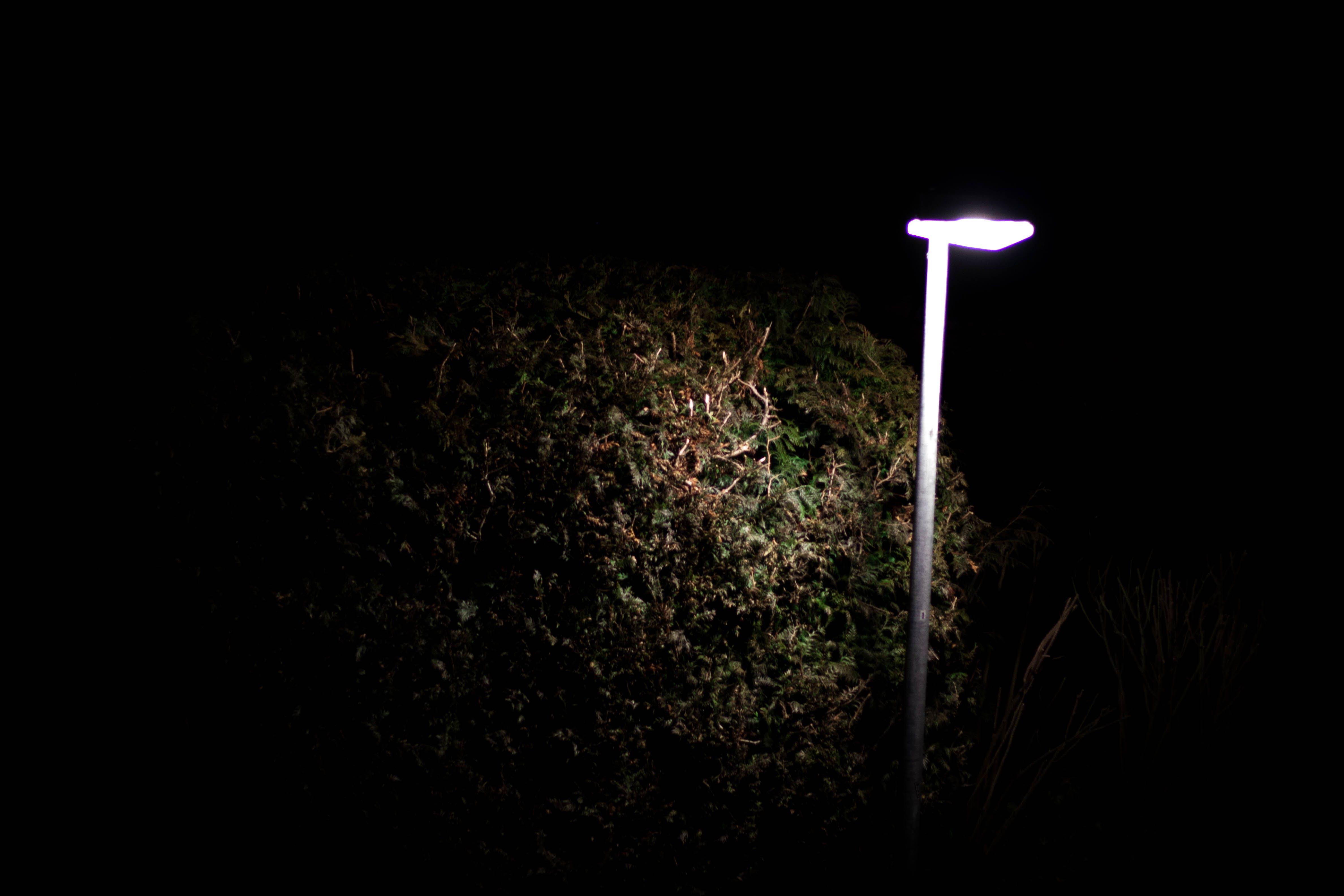 Kostenloses Stock Foto zu licht, nacht, busch, dunkelheit