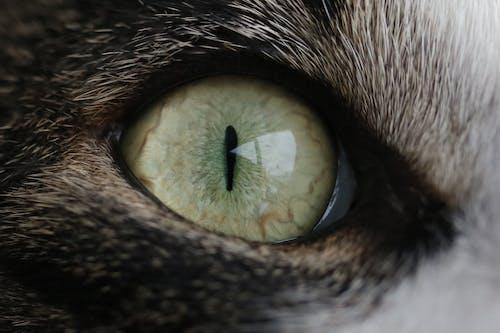 Free stock photo of cat, cateye, Catseye