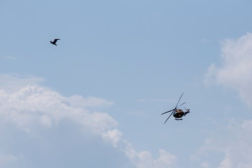 Military helicopter and bird flying in cloudy sky