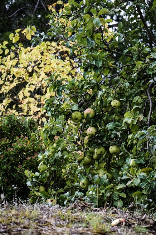 Δωρεάν στοκ φωτογραφιών με apple, αγρόκτημα, ανάπτυξη