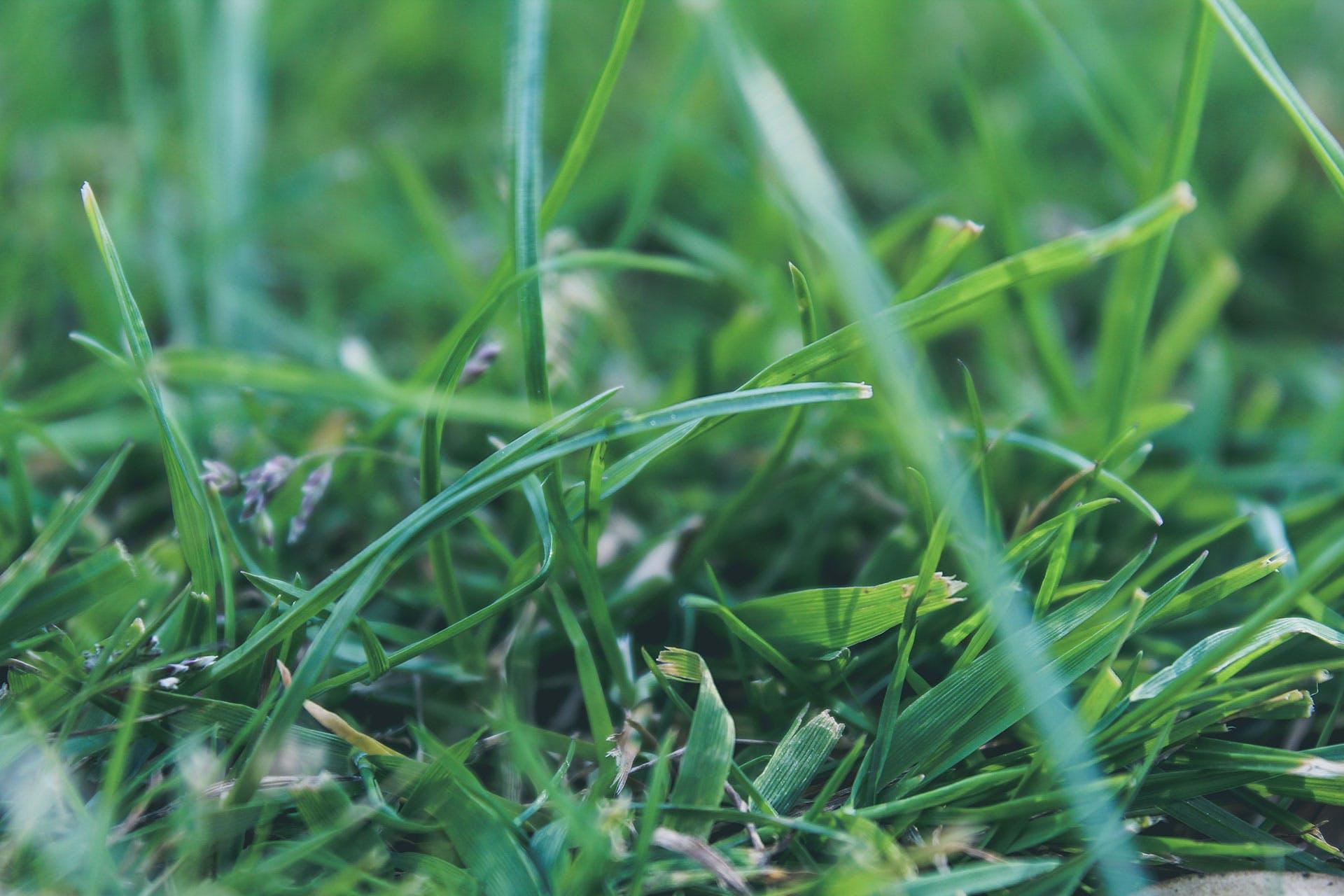 Kostenloses Stock Foto zu gras, rasen, wiese