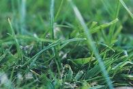 grass, lawn, meadow
