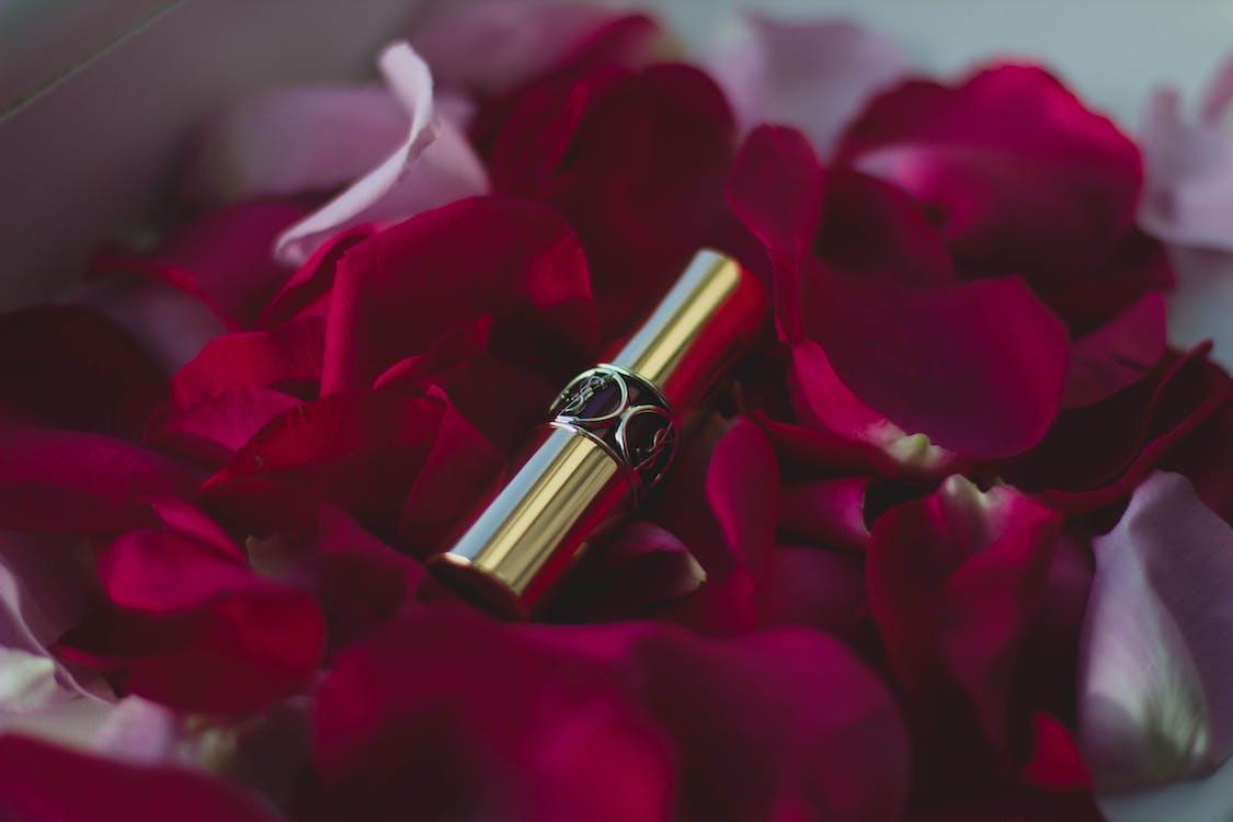 漂亮, 特寫, 玫瑰
