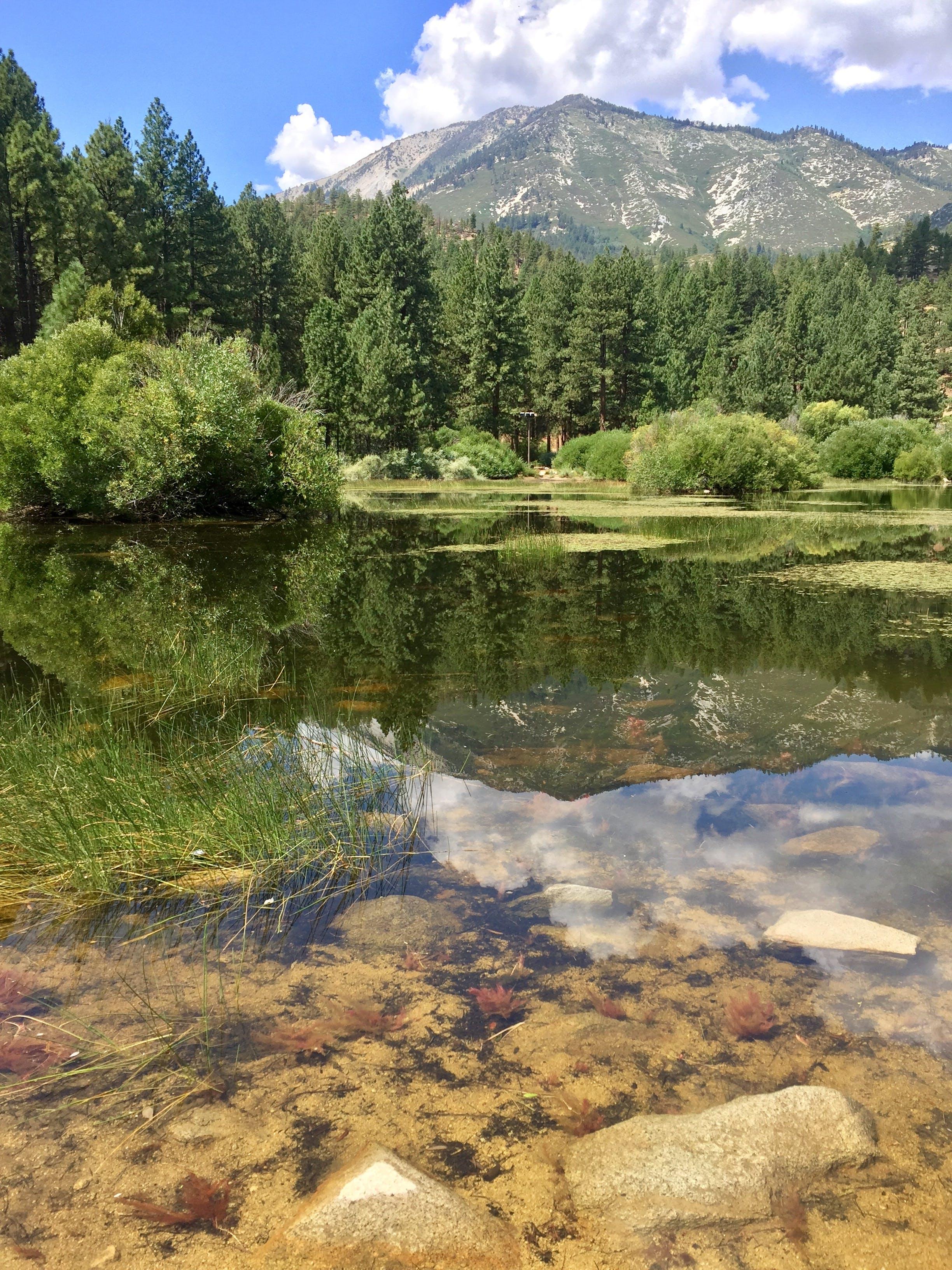Davis Creek, Sierra Nevada mountains