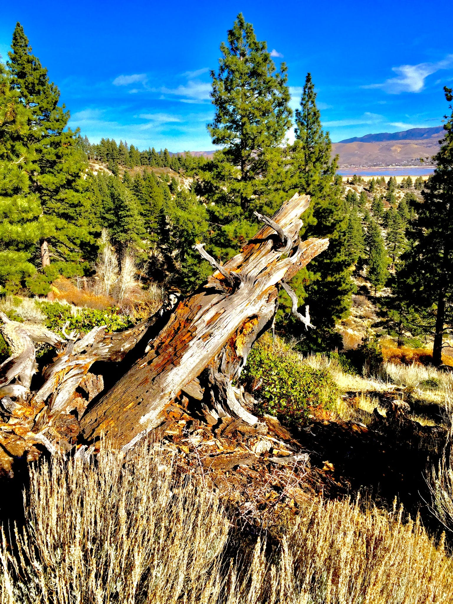 Brown Tree Log Near Pine Tree