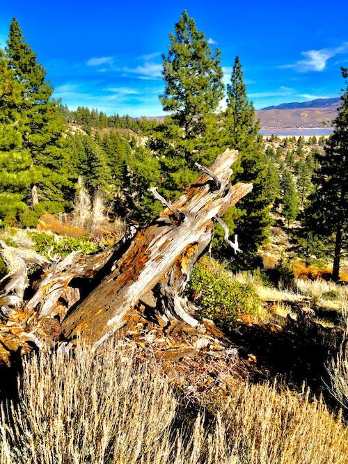 Immagine gratuita di alberi, ambiente, boschi, cielo azzurro