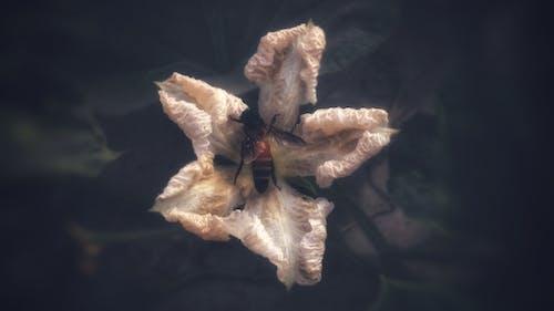 arı, bal arısı, Beyaz çiçek, bulanık arka plan içeren Ücretsiz stok fotoğraf