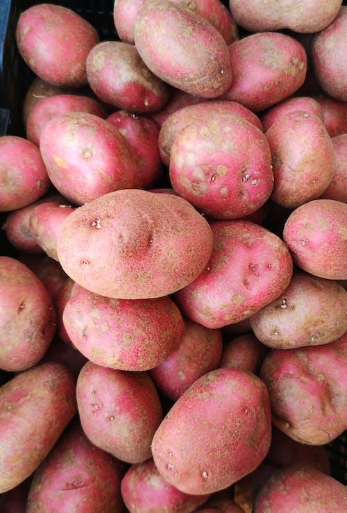 Immagine gratuita di cibo, fotografia di cibo, nutriente