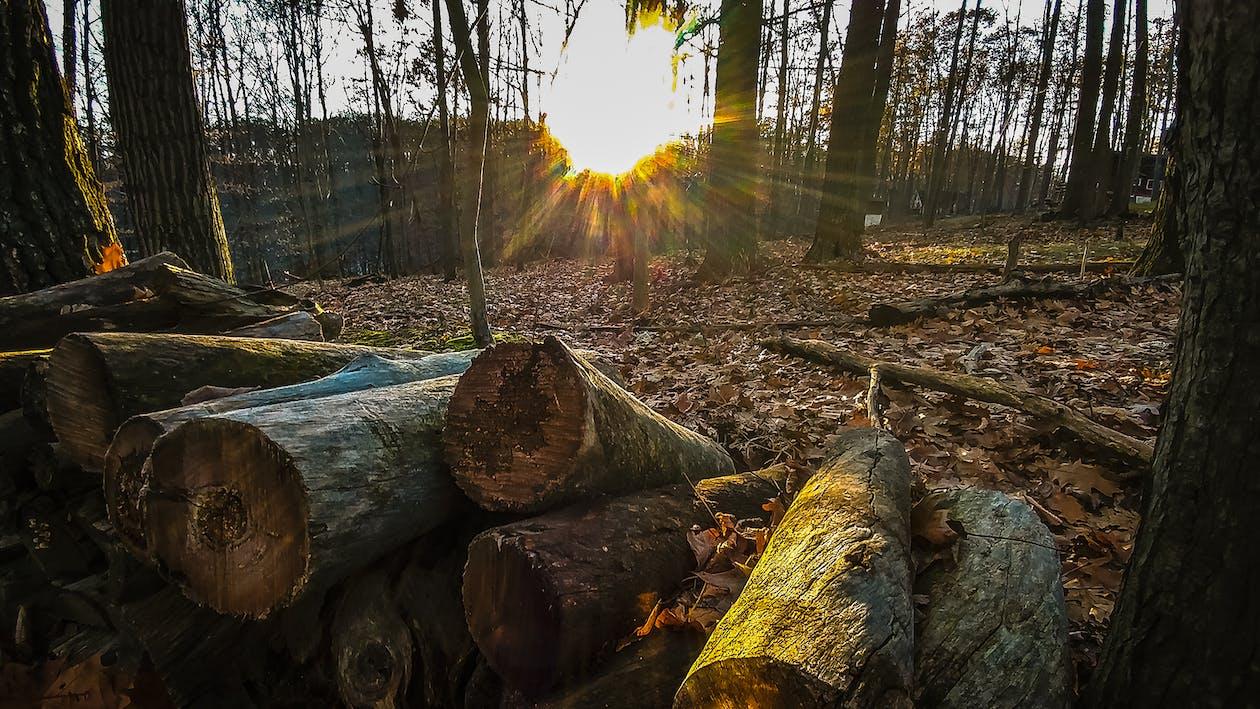 hackat trä, landskap, ljus