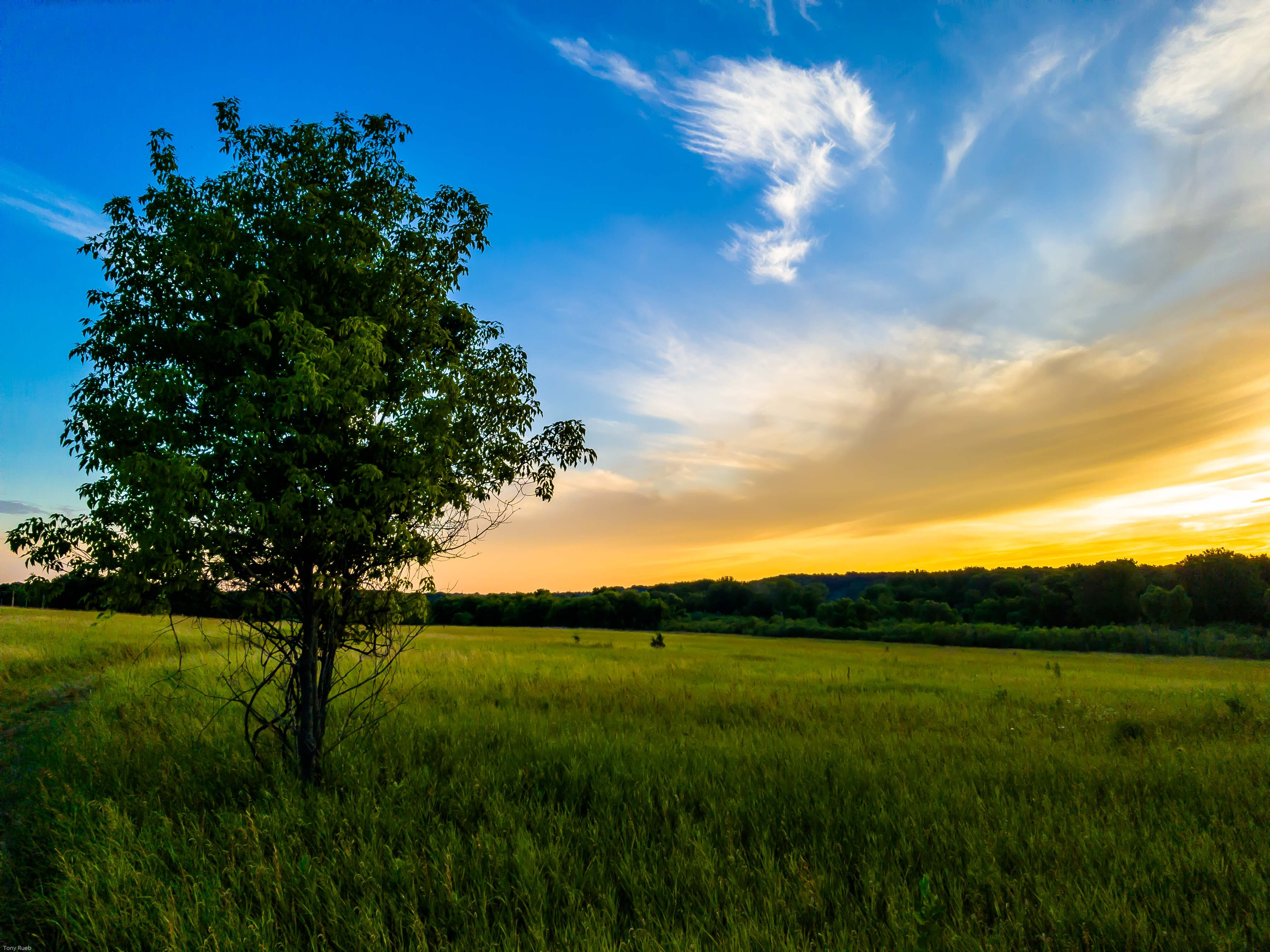 Green Tree Under Blue and White Sky