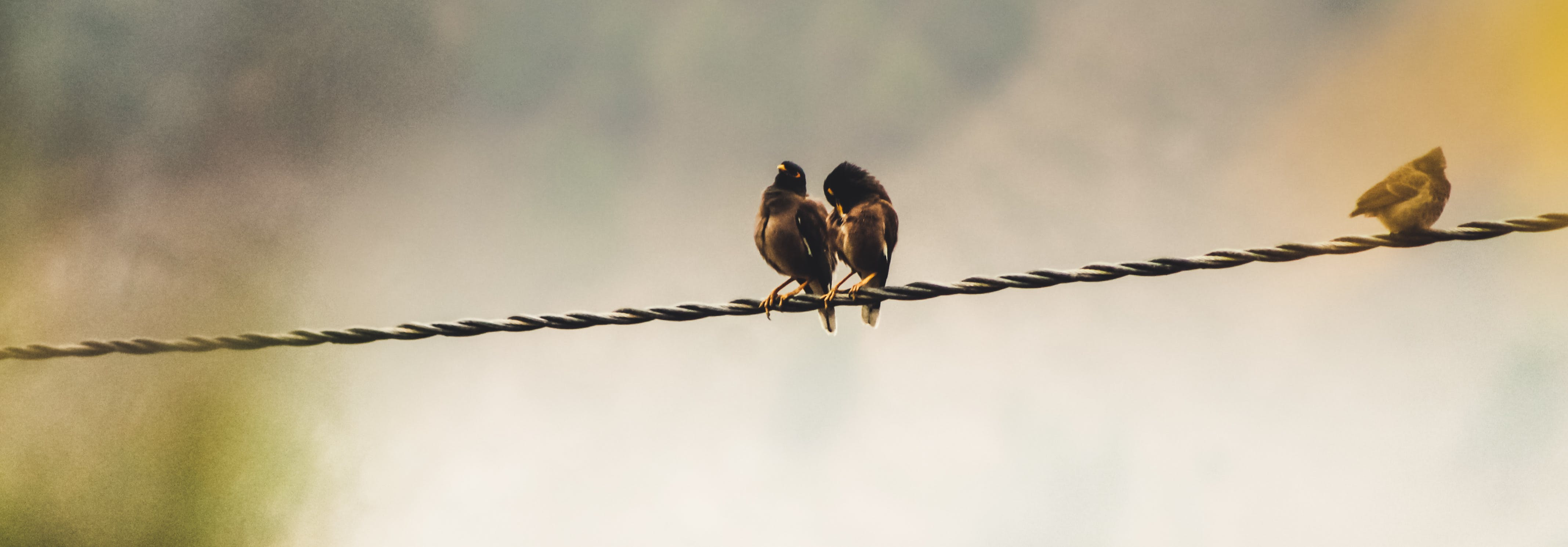 Several Birds Perching on Cable