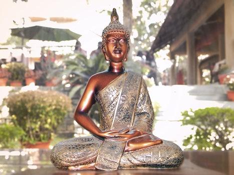 Free stock photo of statue, buddha