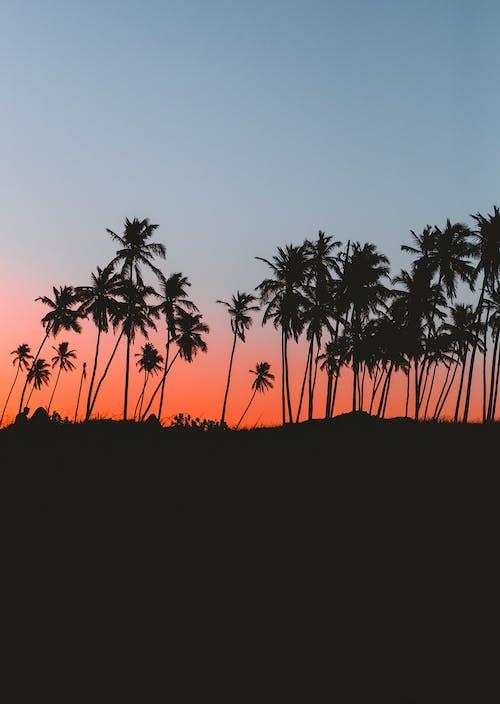 Photos gratuites de à contre-jour, arbre, aube