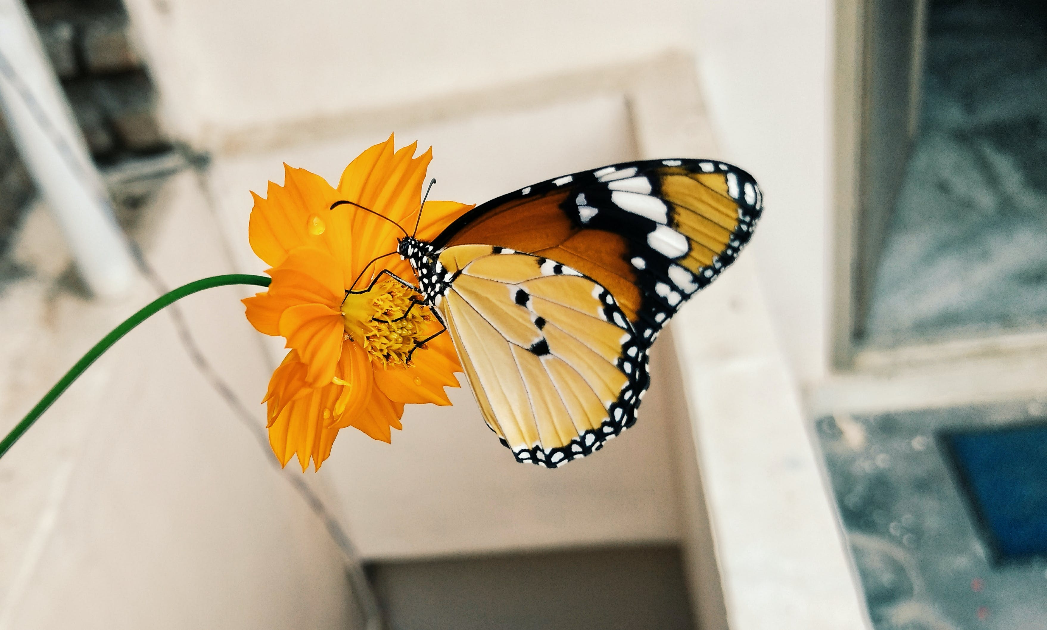 Shallow Focus Photography of Brown Black and Yellow Butterfly on Yellow Flower