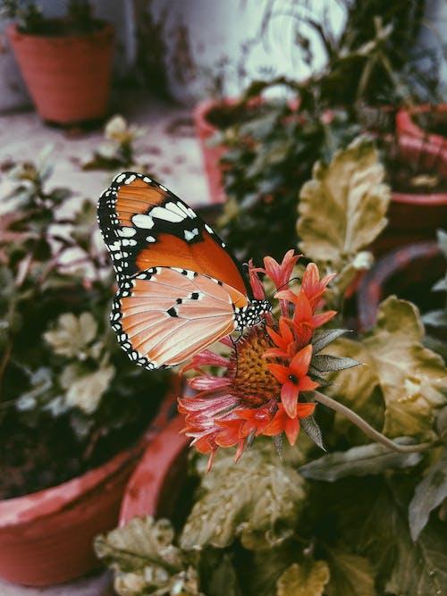 Immagine gratuita di farfalla, fiori bellissimi