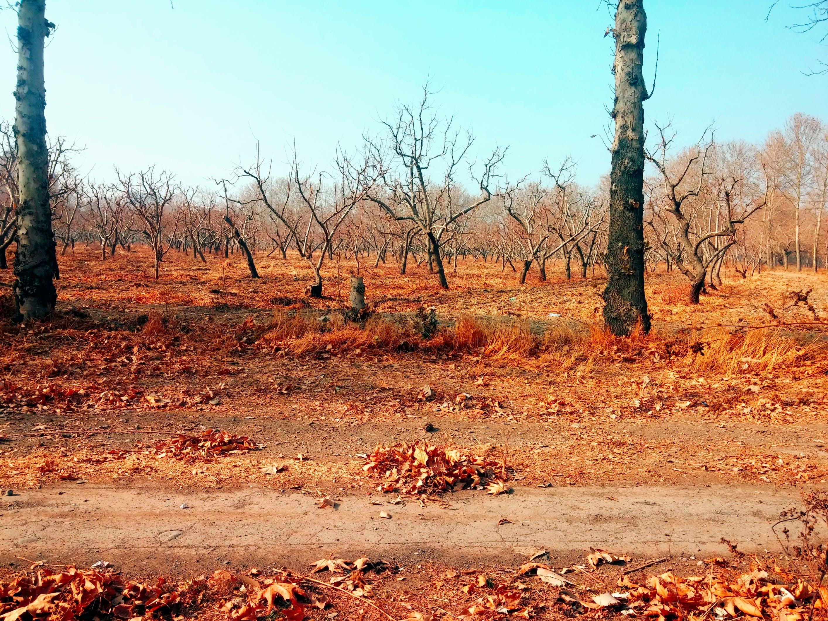 Foto d'estoc gratuïta de arbre, arbres, cel, fulles d'arbres