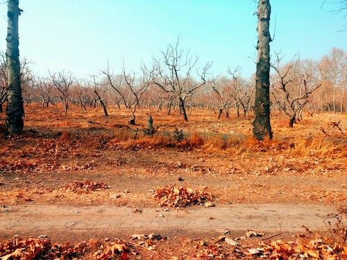 Fotobanka sbezplatnými fotkami na tému listy stromov, obloha, oranžová, pomaranč