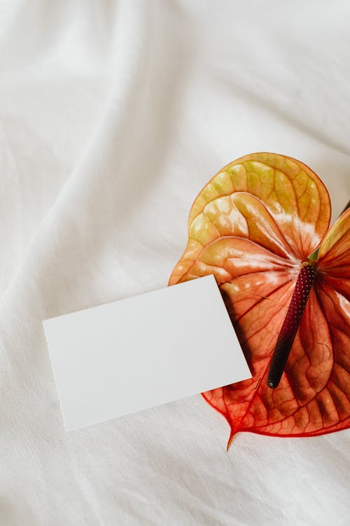 White Greeting Card on Anthurium Flower