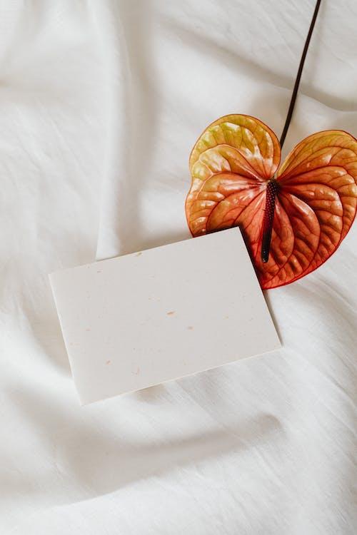 คลังภาพถ่ายฟรี ของ กระดาษ, กลีบดอก, กลีบดอกไม้