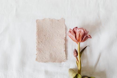 Foto stok gratis batang, berwarna merah muda, bunga