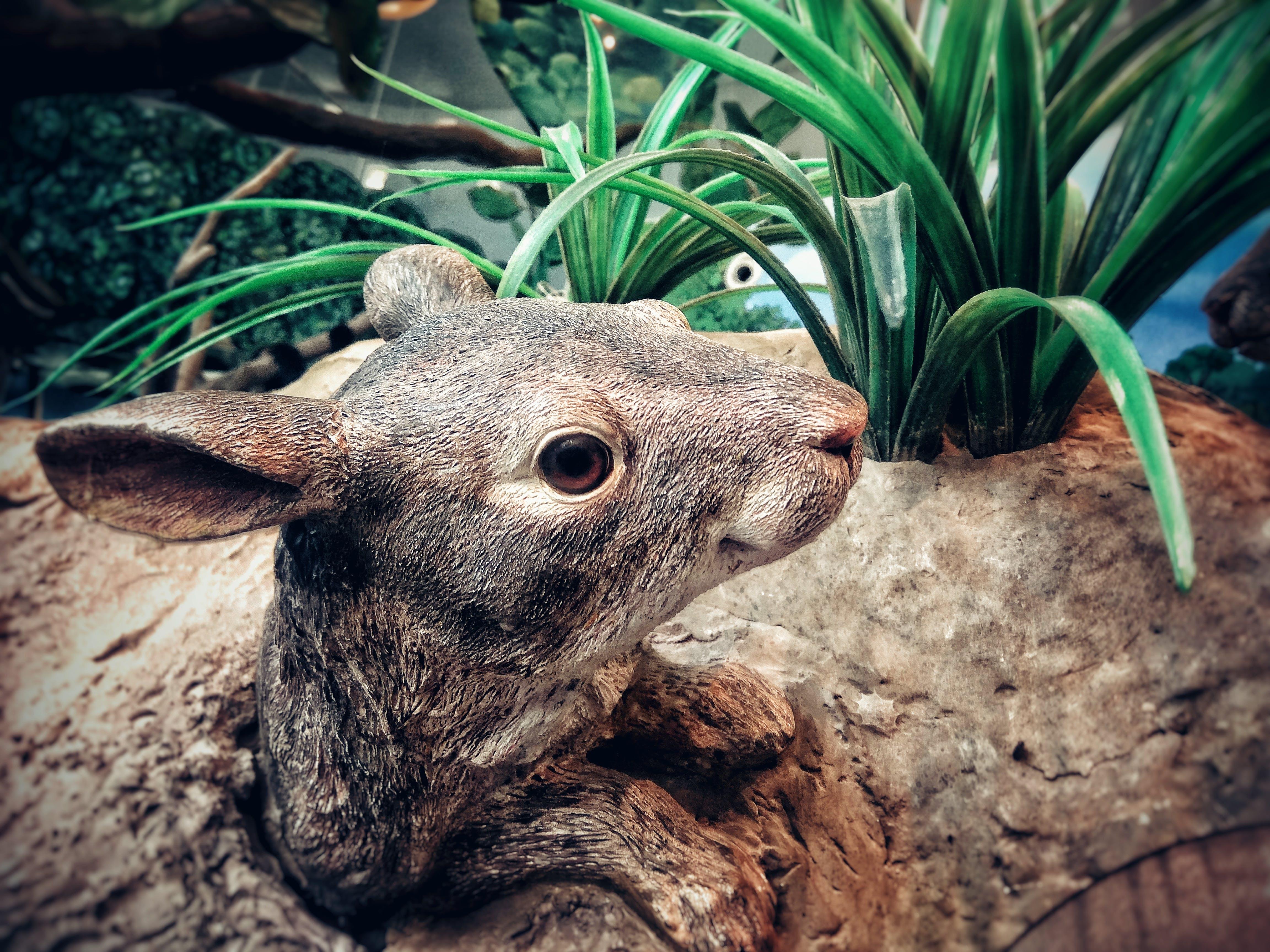 Brown Wooden Animal Carve Decor