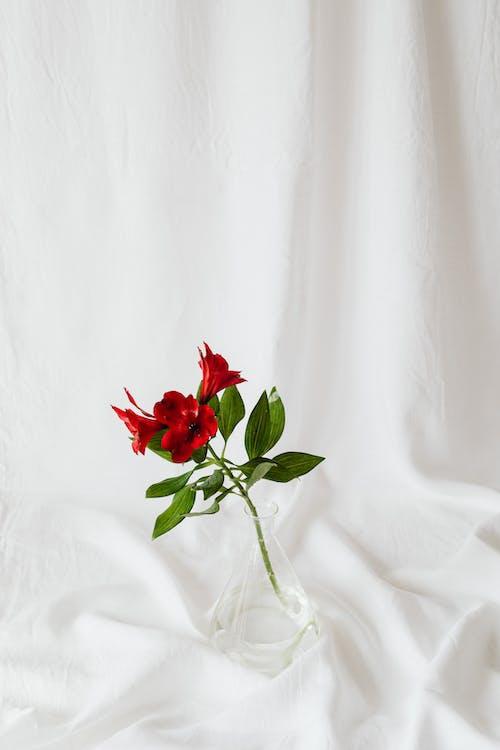 Foto stok gratis berbunga, berkembang, bunga-bunga