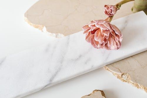 구슬, 꽃, 꽃봉오리의 무료 스톡 사진
