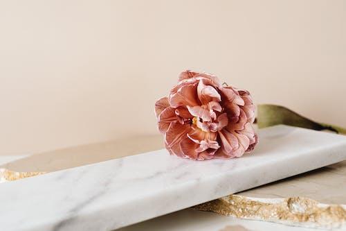 구슬, 꽃, 꽃이 피는의 무료 스톡 사진