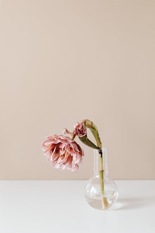 꽃, 꽃병, 꽃봉오리의 무료 스톡 사진