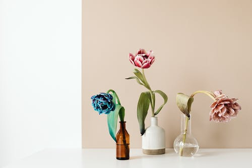 Kostnadsfri bild av beige, blandad, blomma