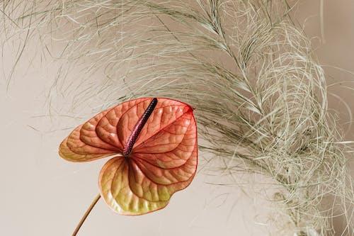 건조한, 꽃, 꽃이 피는의 무료 스톡 사진