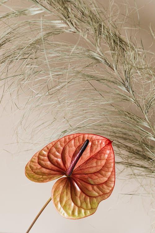 건조한, 계절, 껍질의 무료 스톡 사진