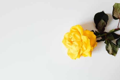 คลังภาพถ่ายฟรี ของ กลีบดอก, กลีบดอกไม้, การตกแต่ง