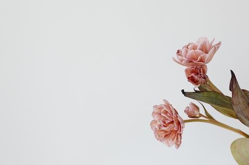 갈색, 껍질, 꽃의 무료 스톡 사진