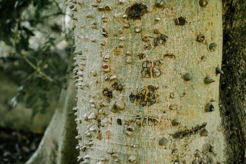 Fotos de stock gratuitas de afilado, al aire libre, árbol