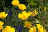nature, flowers