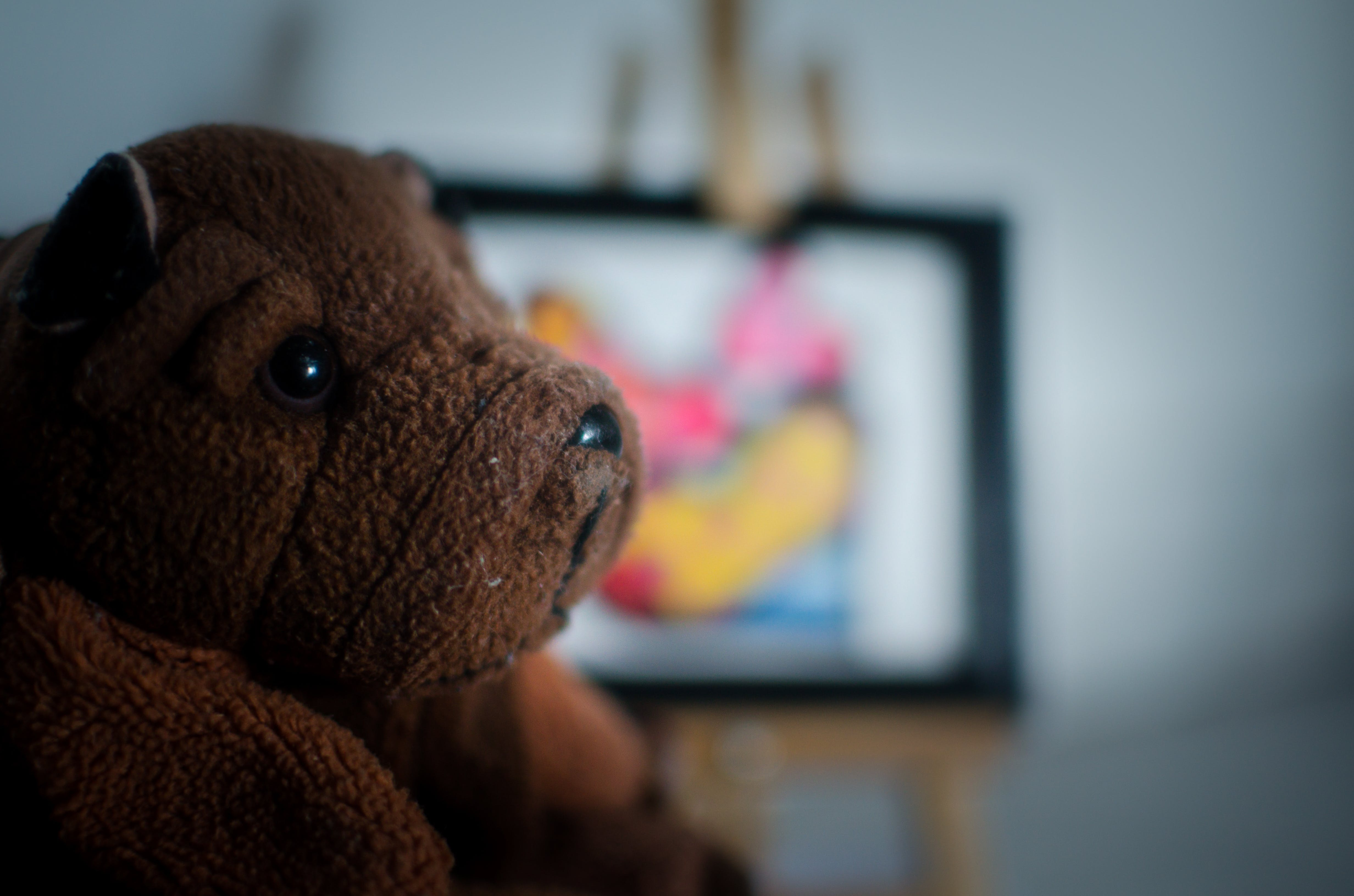 Free stock photo of portrait, bear, old, toy