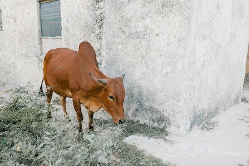 Immagine gratuita di agricoltura, angolo alto, animale