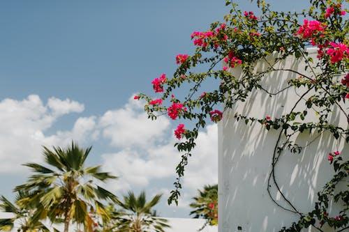 Immagine gratuita di arbusto, aroma, aromatico