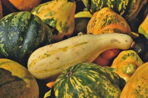 a Cluster of Yellow and Green Squash