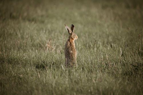 Brown Rabbit on Grass Field