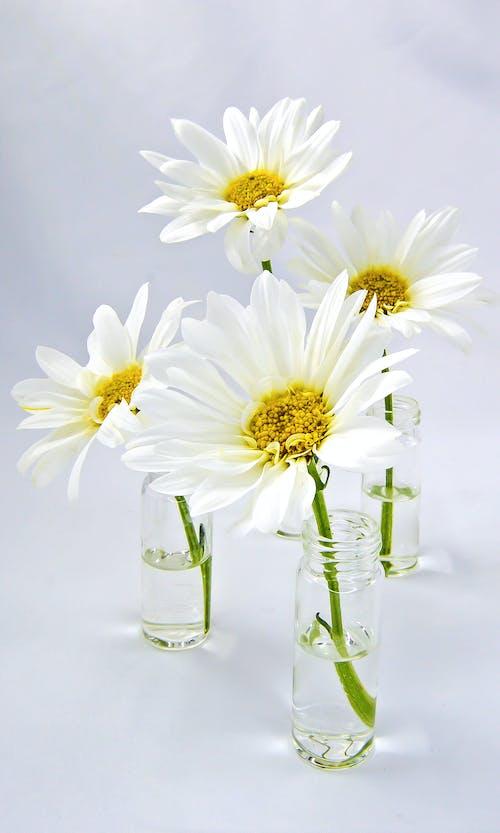 Free stock photo of beautiful flowers, blooming, bohemian
