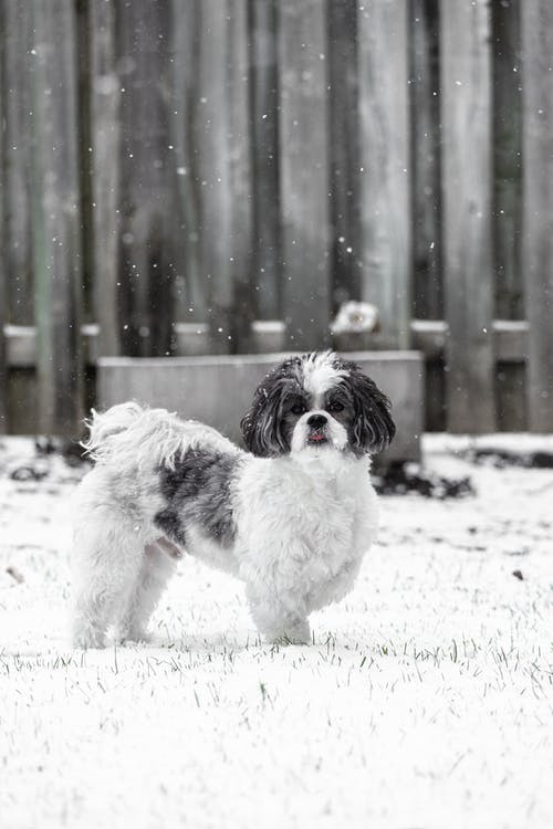 White and Black Furry Dog in Snow