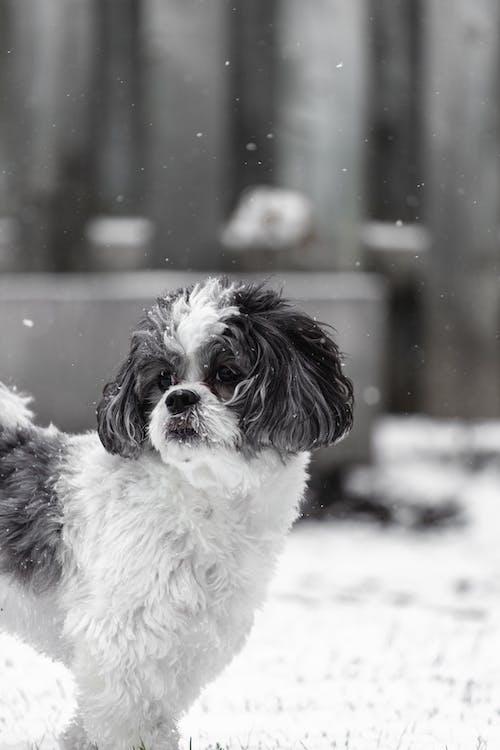 Free stock photo of animal, black dog, canadian dog